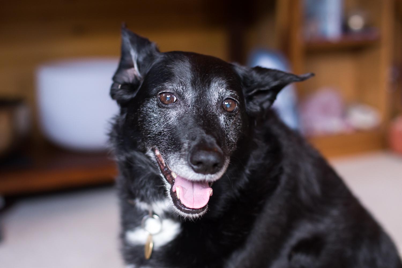 Daisy, Katina Chapman's dog